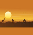 kangaroo on the hill beauty scenery silhouette vector image
