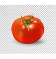 red tomato realistic vector image