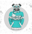 retro hipster animal pug-dog dressed in pullover vector image vector image