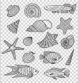 set of shells and fishes vector image vector image