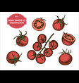 collection of hand drawn colored cherry vector image vector image