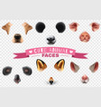 cute animal faces transparent icon set vector image vector image