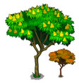 flowering tree with fruits and autumn version vector image vector image