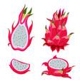 pitahaya fruit isolated on white background vector image