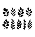 tree branches with leaves silhouettes botanical vector image vector image