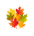 bouquet of autumn maple leaves vector image
