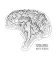 brain in form a topographic map the vector image