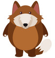 brown wolf on white background vector image vector image
