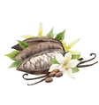 Watercolor cocoa fruit and vanilla flowers vector image vector image
