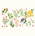 set various branches with flowers leaves vector image