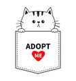 adopt me cute cat in pocket holding hands vector image vector image