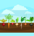 cartoon colorful fresh organic food vegetable bed vector image vector image
