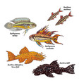 colorful aquarium bottom fishes collection vector image vector image