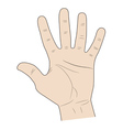 five fingers of a hand vector image vector image