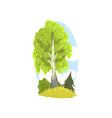 spring or summer landscape scene with birch fir vector image vector image