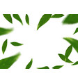 flying tree fresh leaves over white layout vector image