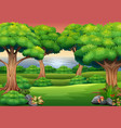 forest background with the nature scene vector image vector image