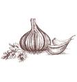 Garlic and parsley hand drawing