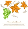 Grapes with autumn leaves around the grapes vector image vector image