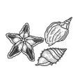 starfish and shells sketch vector image vector image