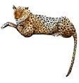 Watercolor leopard vector image vector image