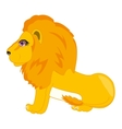 Wildlife lion on white vector image vector image