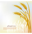 background with wheat vector image vector image