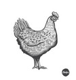 chicken hand drawn in engraving or vector image vector image