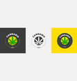graphic logo design with medical marijuana on a vector image vector image
