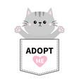 gray cat hug in pocket adopt me pink heart vector image vector image