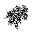 hand drawn berries currant branch hand vector image vector image