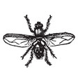 house fly vintage vector image vector image