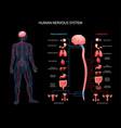human nervous system background vector image