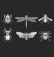 Set hand drawn insects different insects