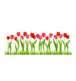tulips flowers isolated vector image vector image