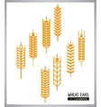 Wheat ears design farm and agriculture concept vector image vector image