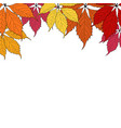autumn leaves on white background vector image