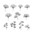 hand drawn ginkgo biloba set on vector image