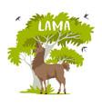 lama and tree vector image