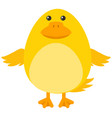 yellow duckling on white background vector image vector image