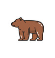 bern bear brown swiss animal isolated line icon vector image