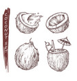 coconut fruit coconut milk juice cocktail sketch vector image vector image
