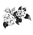 Floral spring roses flowers monochrome vector image