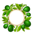 avocado branches frame on white background vector image vector image