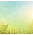 green grass meadow vector image vector image