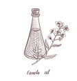 drawing canola oil vector image vector image