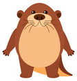 cute beaver with round body vector image vector image