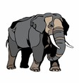 elephant clipart vector image vector image