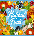 natural organic tropical exotic fruits harvest vector image vector image