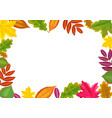 autumn border with forest leaf fall fallen leaves vector image